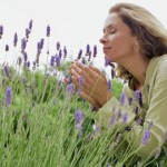 woman smelling lavender